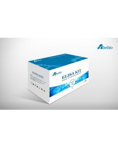 Cat Arylamine N-acetyltransferase 1 (NAT1) ELISA Kit
