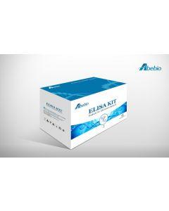 Fish 5-hydroxytryptamine/serotonin (5HT/ST) ELISA Kit