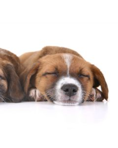 Canine Acetylcholine (ACH) ELISA Kit